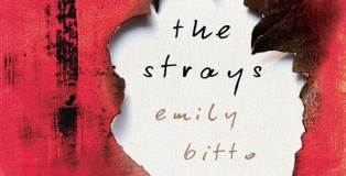 The Strays Feature IMG