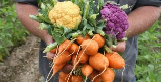 Northey-street-organic-market
