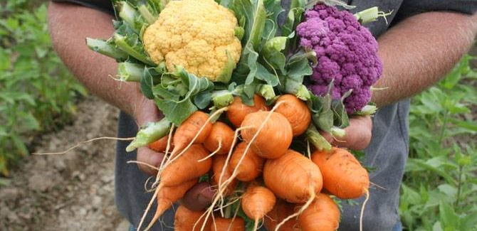 Why you should make a stop at Northey Street Organic Markets