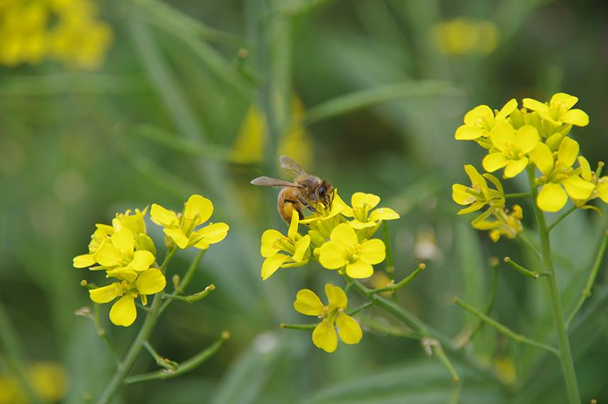 northey-markets bee keeping